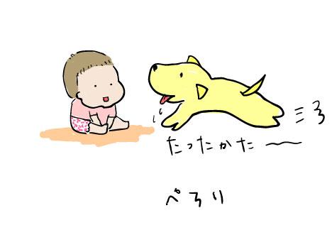 【生後7ヶ月】犬と赤ちゃん