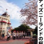 お花見ディズニー!~桜の魅力とは~