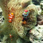 レゴダイバーと一緒に沖縄の海に潜るっ!スキューバダイビング