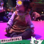 【次女(ほっぺ)7ヶ月】マーメイドラグーンの「スターフィッシュ・プレイペン」デビュー